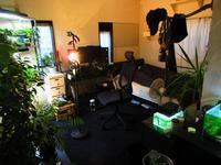 植物「お部屋のお片づけ」 - 孤影悄然