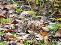 落ち葉の中で朝ごはん。 - ヒロムシ君のお散歩日記