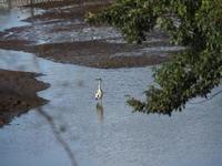 湧水池の鷺 - エンジェルの画日記・音楽の散歩道