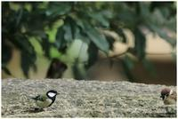 水場にて~身近な野鳥達。 - 今日のいちまい