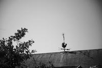 風見鶏 - 節操のない写真館