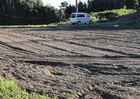 残りの芋掘り紅はるか - 島暮らしのケセラセラ