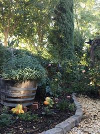 庭仕事が終わってぐびっとビール - ちょっと田舎暮らしCalifornia