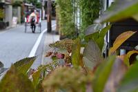 名残りの紫陽花…人力車のある光景 - Taro's Photo