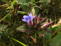 深入山③ - 清治の花便り