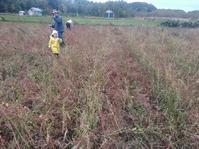 そば収穫完了 - 長福ファームのブログ