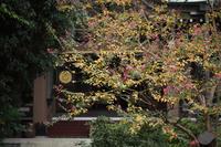 秋色のお寺 - 写真の記憶