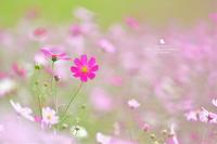身近な幸せ - お花びより