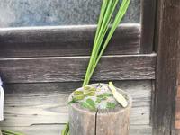 「野草を食べる会」で、楽しく美味しく健康に! - 奈良 京都 松江。 国際文化観光都市  松江市議会議員 貴谷麻以  きたにまい