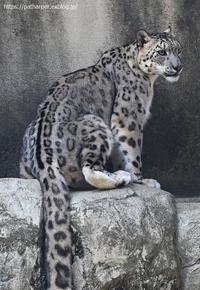 2020年9月王子動物園3その1 - ハープの徒然草
