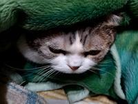 巣ごもり始めました - 午睡のあと うめももさくら