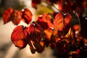 First Leaves To Turn Red - SILENT SOLILOQUY