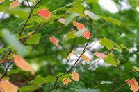 秋の赤塚植物園~木々の表情 - 柳に雪折れなし!Ⅱ