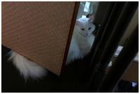 猫にノミがついた -  one's  heart