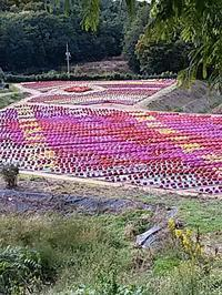 まだ薔薇もある、、、ケド - hanasdiary.exblog.jp