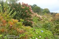 中之条秋色が素敵な「山の上庭園」 - 風の彩りー3