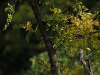 水元公園 2020.10.13(1) - 鳥撮り遊び