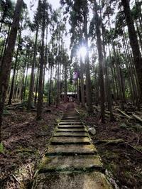 杉並木 京都市 - ty4834 四季の写真Ⅱ