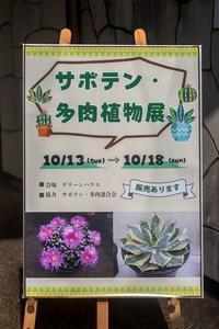 サボテン・多肉植物展 - あだっちゃんの花鳥風月