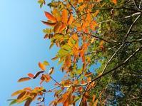 五瀬山の秋… - 侘助つれづれ