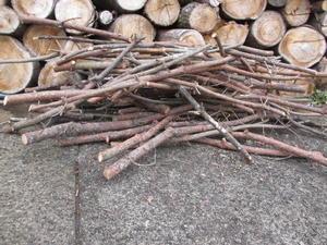 松の木伐採(2) -