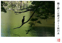 鵜と鯉と足漕ぎボート秋の水 - 風と光の散歩道、有希編2a