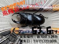 新潟県のオオクワガタ採集!鬼隊長さん、ジェントルさんの2020年自慢の採集個体♪ - くわがた散歩道