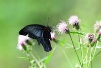 蝶の撮影会 - 季節の映ろひ