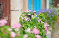 箱根・星の王子さまミュージアムSEL85F18 - エーデルワイスPhoto