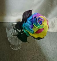 rainbowに恋。 - サリィ写真館