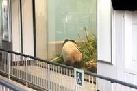 最近のシャンシャンは、写真撮影が可能になりました(上野動物園) - 旅プラスの日記