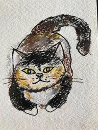 猫スケッチ練習帳雨にも負けず - ~メインクーンと一緒~デナちな日々