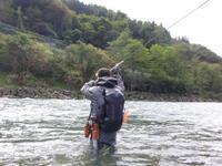 秋の本流と浜名湖!どちらも楽しいですわね! - Fly Fishing Total Support.TEAL