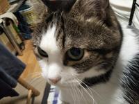 猫こたつの季節・・・ちょい重い - 化学物質過敏症・風のたより2