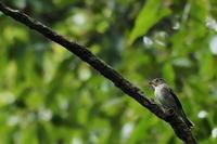 秋ヶ瀬公園・ピクニックの森 2020.10.13(2) - 鳥撮り遊び
