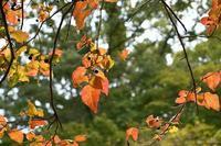 秋! - ささつぶ