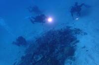 20.10.18ワイワイ、クッカバラ号 - 沖縄本島 島んちゅガイドの『ダイビング日誌』