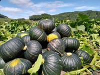 2020.08.24 厚真町で農業バイト - ジムニーとハイゼット(ピカソ、カプチーノ、A4とスカルペル)で旅に出よう
