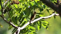 烏山椒に集まる野鳥たち - なんでもブログ2