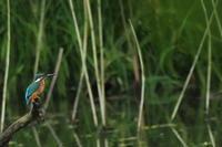 秋ヶ瀬公園・ピクニックの森 2020.10.13(3) - 鳥撮り遊び