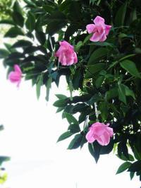 薔薇とアサリ (*´ω`) - のーんびり hachisu 日記