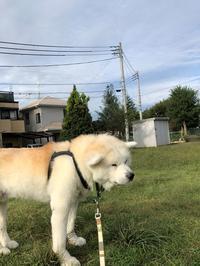 血液検査の結果3(10月12日) - 秋田犬「大和と飛鳥丸」の日々Ⅱ