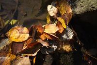 枯れ葉溜まり - 節操のない写真館