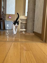 プロジェクトMから、守りたい猫くりちゃん - gin~tetsu~nosuke