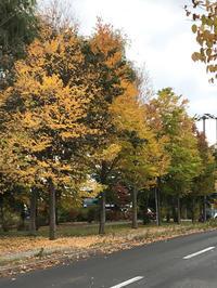 街路樹も秋色♪ - 笑う門には福来たる