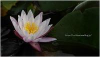 光る花 - ルリビタキの気まぐれPATA*PATA