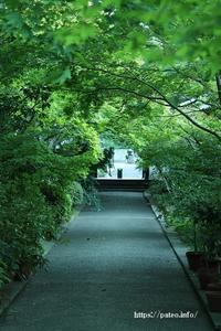 足立区薬師寺の緑み一色も心打つ! - 一場の写真 / 足立区リフォーム館・頑張る会社ブログ