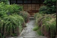 萩と彼岸花(常林寺) - 花景色-K.W.C. PhotoBlog