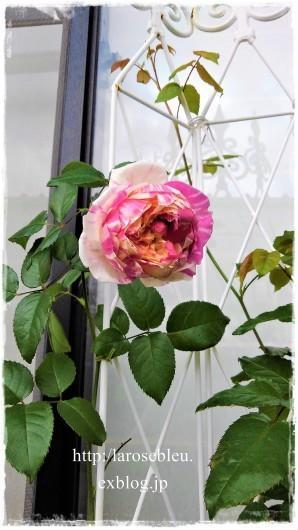 'エドゥアール・マネ'の不思議な色合い - La rose 薔薇の庭