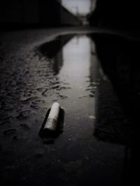雨の残り香 - 旅する       memephoto